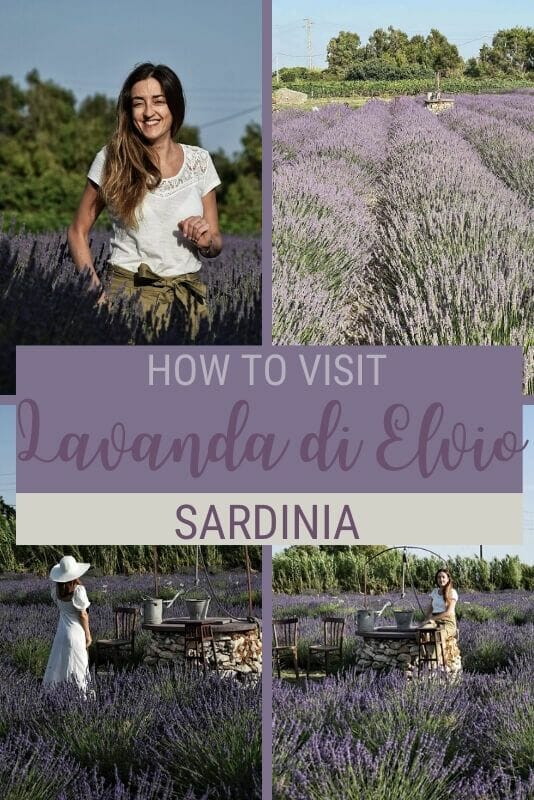 Discover how to visit La Lavanda di Elvio, Sardinia's first lavender field - via @c_tavani