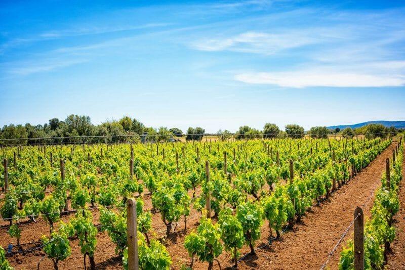 wineries in Sardinia
